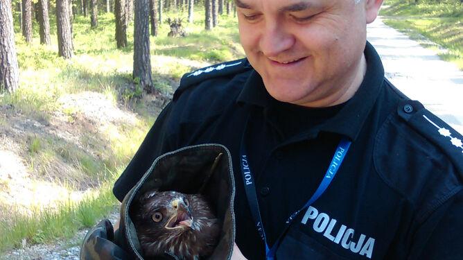 Myszołów uratowany przez policjantów