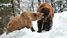 W Beskidach grasują niedźwiedzie. Uwaga, są głodne