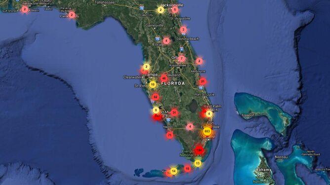 Miejsca na Florydzie, w których widziano legwany zielone