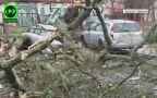 Nagranie drzewa powalonego na samochód w Szczecinie (Kontakt 24/Okeanos)